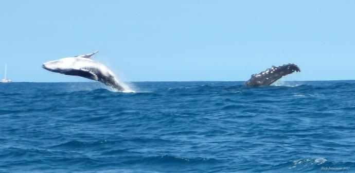 na-pali-whales-kauai-021